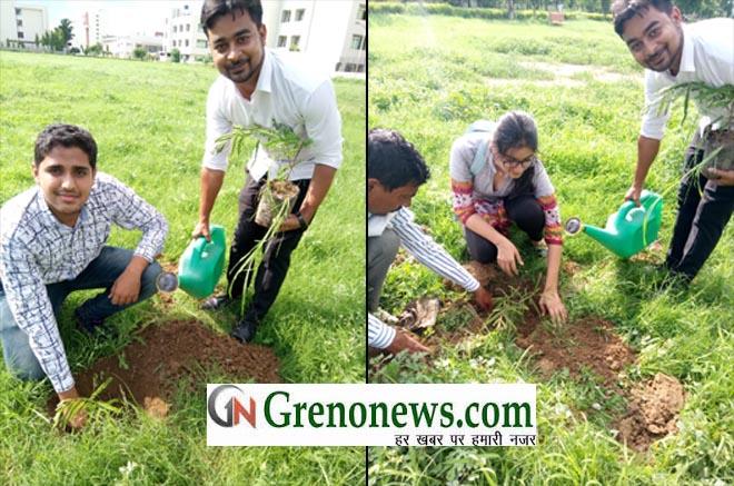 PLANTATION IN UNITED COLLEGE- GRENONEWS